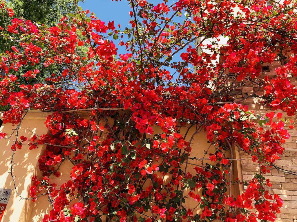 Wand aus Blumen