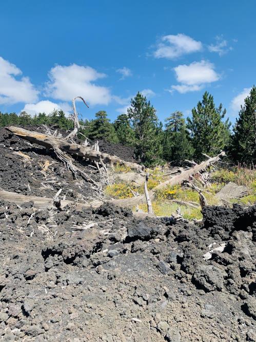 Pinienbaumskelett Etna