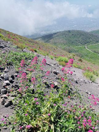 Flora und Fauna des Vesuv