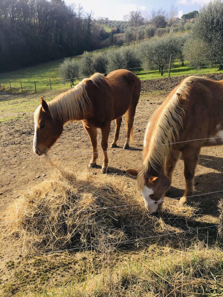 Pferde am grasen