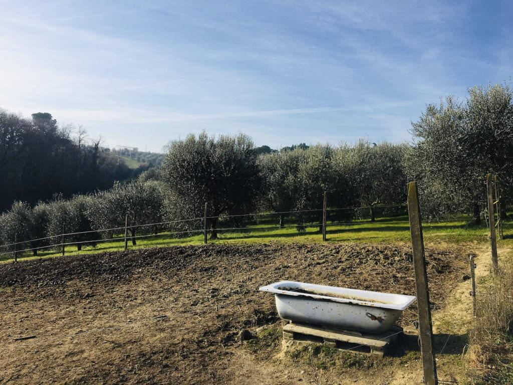 Pferdekuppel und Olivenbäume