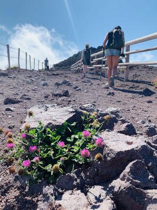 Weg hinauf zum Vesuv