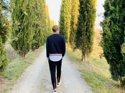 Pinienbäume Italien